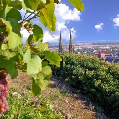 Découverte du vignoble d'Obernai