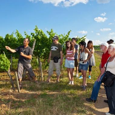 Les 7 Péchés Capiteux des vignerons de Bernardswiller