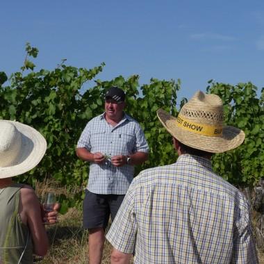 Führung und Weinprobe durch die Weinberge von Bernardswiller