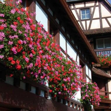 A la découverte de la vieille ville d'Obernai