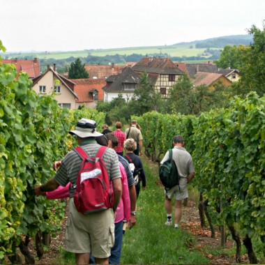 Wine trail of Bernardswiller