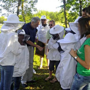 Visite découverte d'un rucher