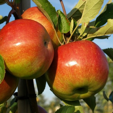 Discovering an orchard