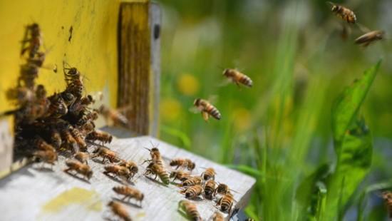 A la découverte d'un rucher