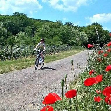 Carte interactive des itinéraires cyclables des terres de Sainte Odile