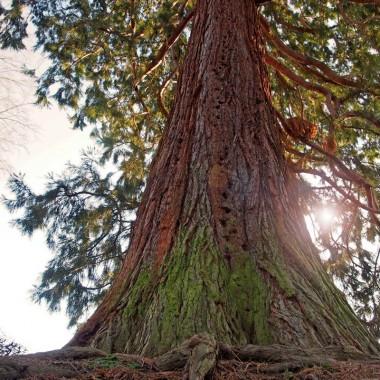 Visite guidée - les arbres du parc municipal de Hell