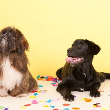 Education canine - Journée récréative