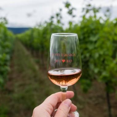 Alsace Écotourisme – La vigne patrimoine vivant