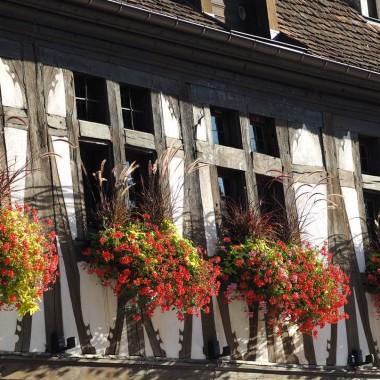 Visite thématique - Secrets de construction des maisons alsaciennes