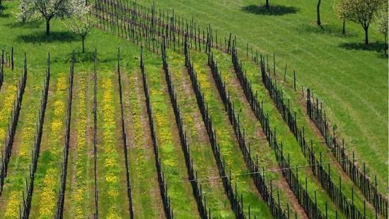 Le printemps de la vigne