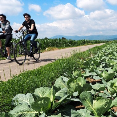 Cabbage and Vineyard Tour
