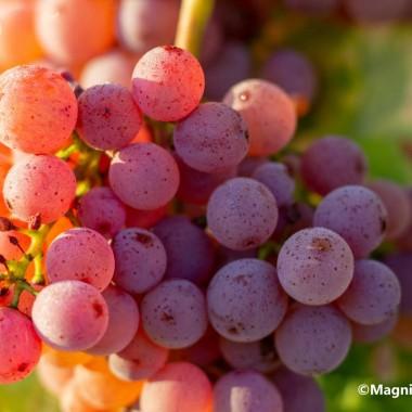 Évasion Sensorielle sur la Route des Vins