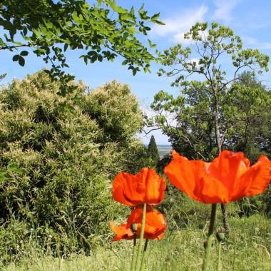 Le jardin botanique du col de saverne for Amis jardin botanique