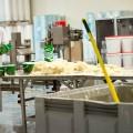 Visiting a sauerkraut factory